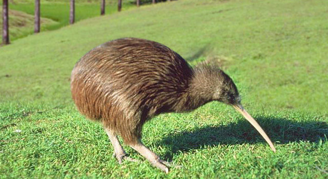 Find out more about kiwi